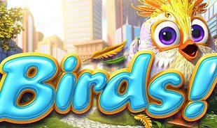 birds! Slot and Casino Game